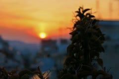 Belle vue loin dessus de coucher du soleil de couleur photographie stock libre de droits