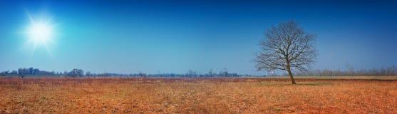 Belle vue panoramique d'un arbre solitaire sur l'orange de pré Photos stock