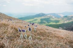 belle vue scénique des fleurs et des montagnes de ressort en Ukraine, Crimée, photographie stock