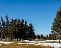 Belle vue tôt de ressort du pré alpin canadien avec le ciel bleu photographie stock libre de droits