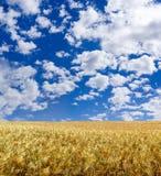 Belle zone de blé Photos libres de droits