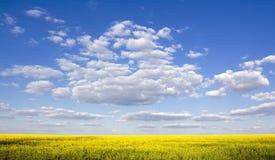 Belle zone de viol et ciel bleu d'espace libre Photographie stock libre de droits
