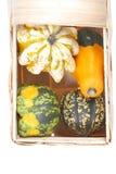 Belle zucche decorative Immagine Stock