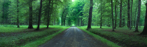 Belleau Wood, France. Road in Belleau Wood, France,panoramic photo Royalty Free Stock Images