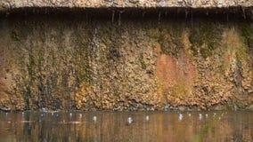 Bellen in het water door stromende stromen wordt gevormd die stock footage