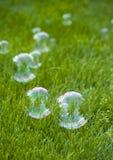 Bellen op gras Royalty-vrije Stock Afbeelding
