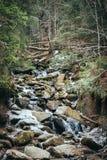 Bellende lentedalingen van de bergen macht van wilde aard Bergstroom in de Lente Stock Afbeelding