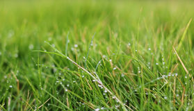Belles baisses de pluie sur l'herbe pendant le matin Photos stock