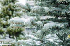 Belles branches impeccables couvertes de neige blanche images libres de droits