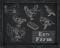 Belles cailles d'oie de canard de dinde de poulet de coupe de plan sur illustration de vecteur