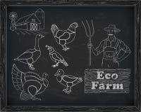 Belles cailles d'oie de canard de dinde de poulet de coupe de plan sur illustration libre de droits
