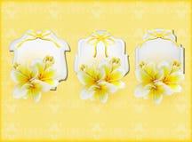 Belles cartes cadeaux avec des plumerias jaunes Photographie stock libre de droits