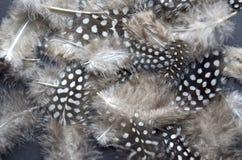 Belles clavettes Photo stock