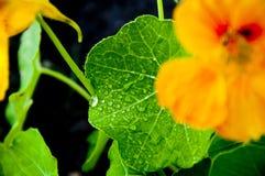 Belles couleurs Image stock