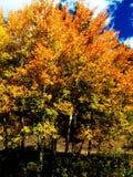 Belles couleurs d'automne Images libres de droits