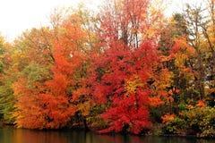 Belles couleurs d'automne image stock