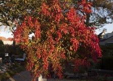 Belles couleurs d'automne Image libre de droits