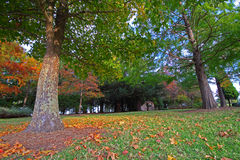 Belles couleurs d'automne, chute Photographie stock libre de droits