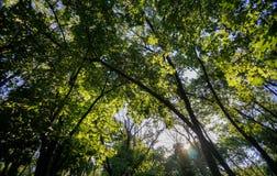 Belles couronnes d'arbre Photos stock