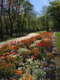 Belles et étonnantes fleurs images stock