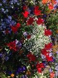 Belles et ?tonnantes fleurs images stock