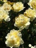 Belles et ?tonnantes fleurs photo stock