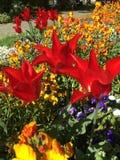 Belles et ?tonnantes fleurs images libres de droits