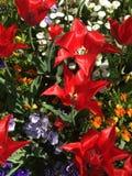 Belles et ?tonnantes fleurs image libre de droits
