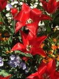Belles et ?tonnantes fleurs image stock