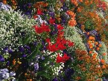 Belles et ?tonnantes fleurs photographie stock