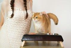 Belles femmes avec des chats et des aliments pour chats Photographie stock libre de droits