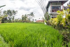 Belles fermes de riz à la communauté image stock