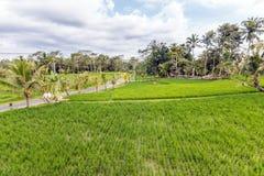 Belles fermes de riz à la communauté image libre de droits