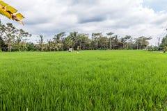 Belles fermes de riz à la communauté images libres de droits
