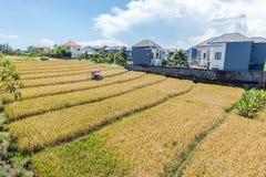 Belles fermes de riz à la communauté photographie stock
