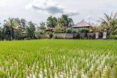 Belles fermes de riz à la communauté photo libre de droits
