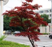 Belles feuilles d'arbre en automne Images libres de droits