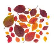 Belles feuilles d'automne colorées de collection d'isolement sur le fond blanc Photographie stock libre de droits