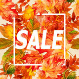 Belles feuilles d'automne colorées de collection pour la copie Images stock