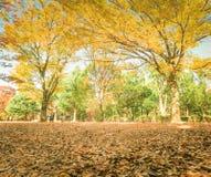Belles feuilles d'automne du Japon en Meiji Jingu Gaien Park de Tokyo photo stock