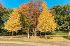 Belles feuilles d'automne du Japon en Meiji Jingu Gaien Park de Tokyo image stock