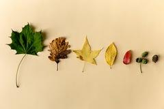 Belles feuilles d'automne sur le fond en pastel Image stock