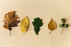 Belles feuilles d'automne sur le fond en pastel Photos libres de droits