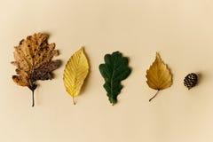 Belles feuilles d'automne sur le fond en pastel Photographie stock libre de droits