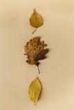 Belles feuilles d'automne sur le fond en pastel Images stock