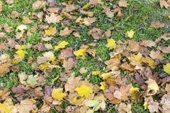 Belles feuilles d'automne tombées Photos stock
