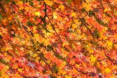 Belles feuilles d'automne vives Image libre de droits