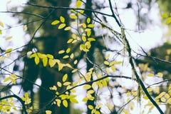 Belles feuilles dans une forêt sauvage photos libres de droits