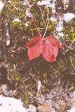 Belles feuilles dans une forêt sauvage photographie stock libre de droits