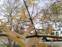 Belles feuilles de couleur orange dans la forêt de bord de la route, avec des voitures passant par photographie stock libre de droits